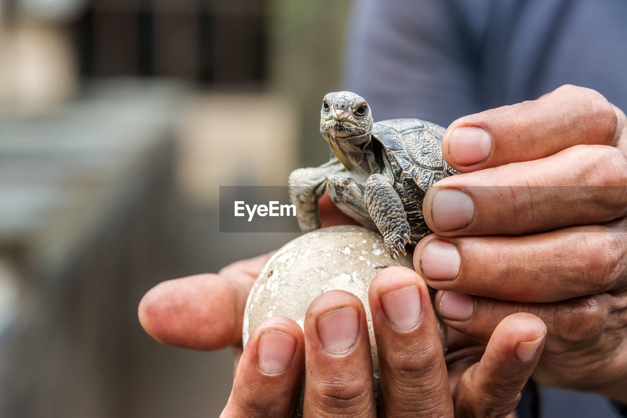 Midsection Of Person Holding Young Tortoise And Egg