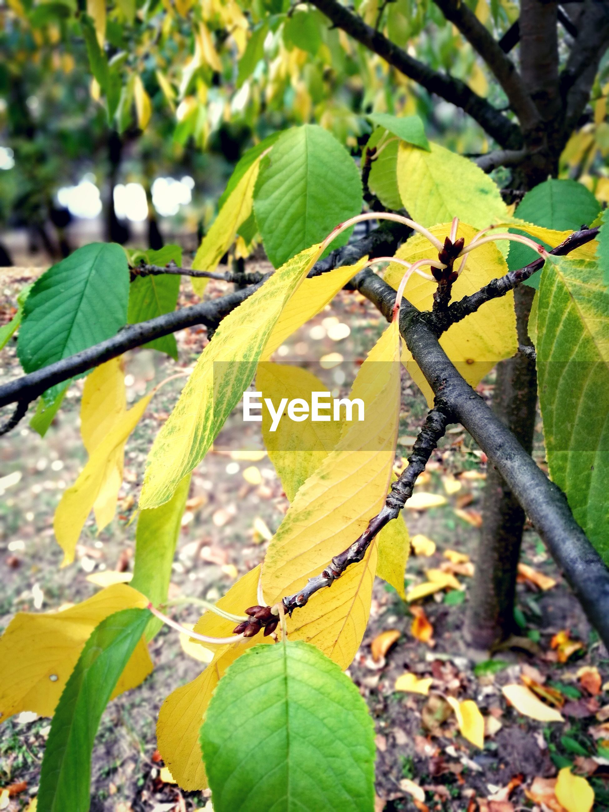 growth, leaf, green color, nature, day, plant, outdoors, focus on foreground, beauty in nature, no people, tree, freshness, close-up, yellow, fragility