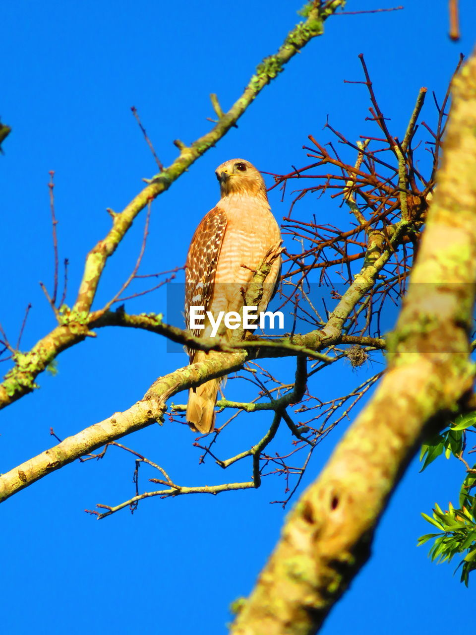 plant, animal, animal themes, low angle view, perching, tree, animals in the wild, animal wildlife, branch, vertebrate, one animal, bird, sky, nature, clear sky, blue, no people, day, bird of prey, outdoors, eagle, falcon - bird