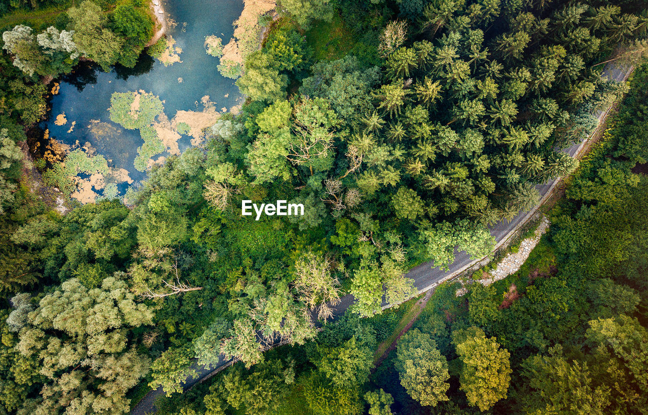 plant, day, no people, water, tree, nature, beauty in nature, green color, high angle view, growth, aerial view, scenics - nature, outdoors, tranquility, land, non-urban scene, transportation, tranquil scene, forest