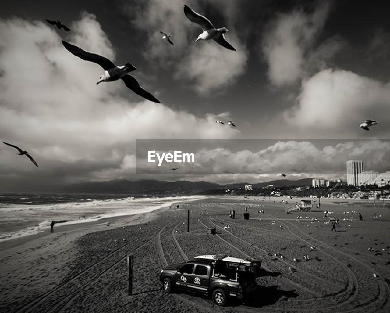 flying, cloud - sky, bird, outdoors, sky, beach, animal themes, day, nature, sand, no people, landscape, building exterior, city