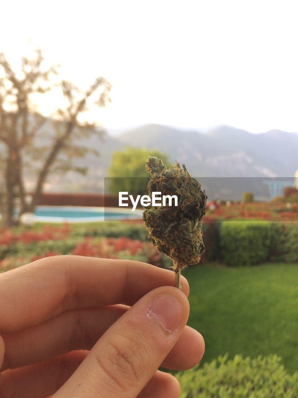 Close-Up Of Hand Holding Marijuana In Park