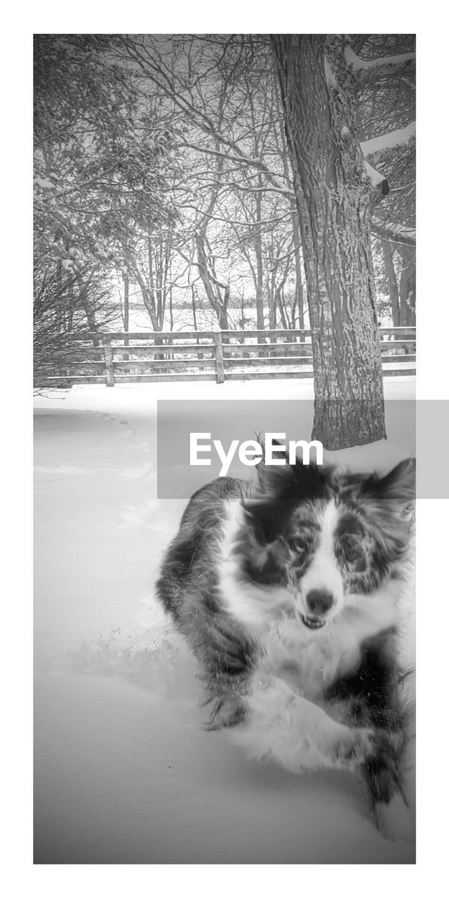 tree, pets, domestic animals, animal themes, bare tree, one animal, tree trunk, nature, winter, branch, no people, domestic cat, mammal, day, outdoors, dog, snow, beauty in nature, cold temperature, landscape, sky