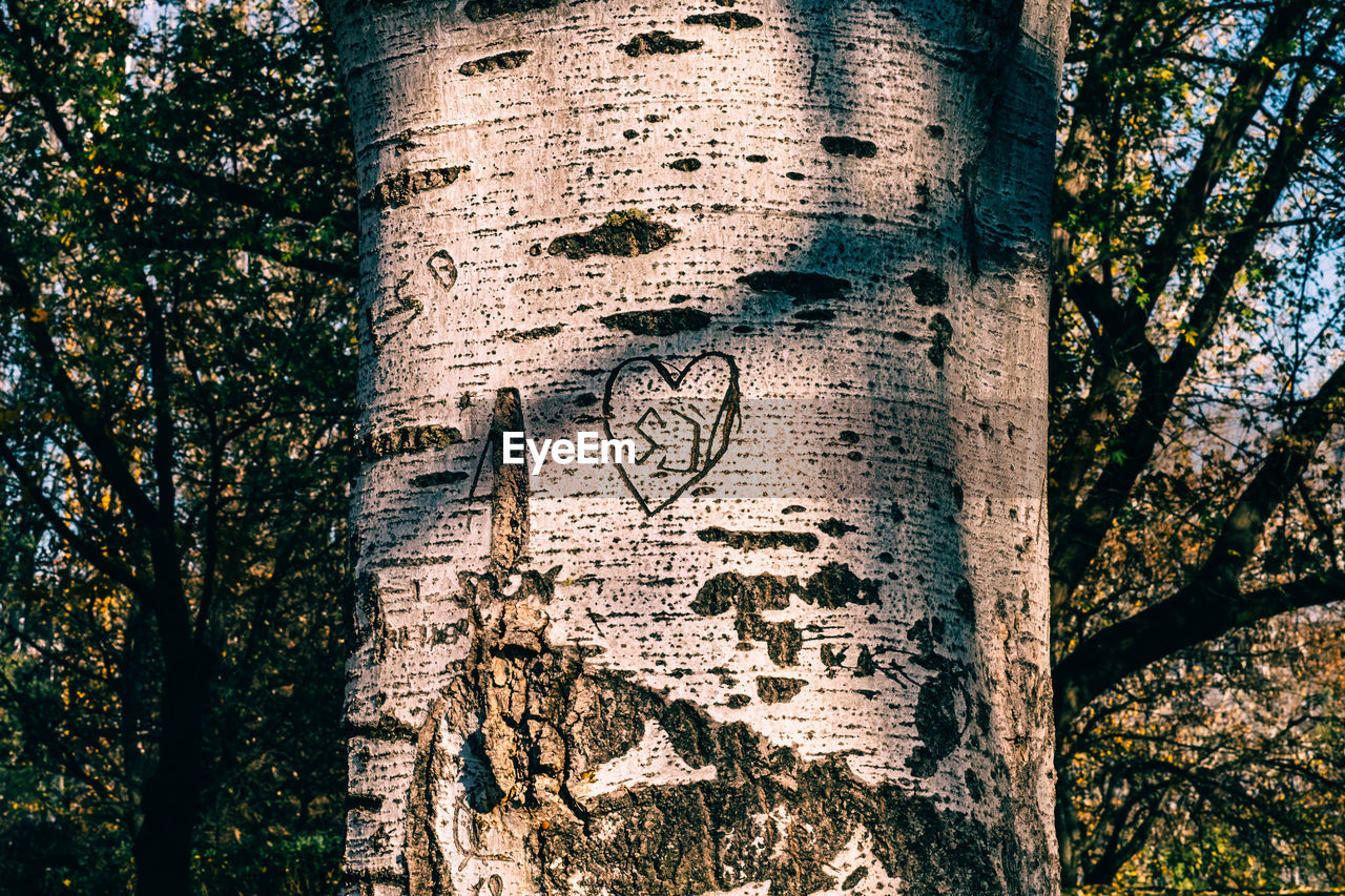 tree trunk, tree, text, communication, day, outdoors, textured, no people, close-up, nature, branch