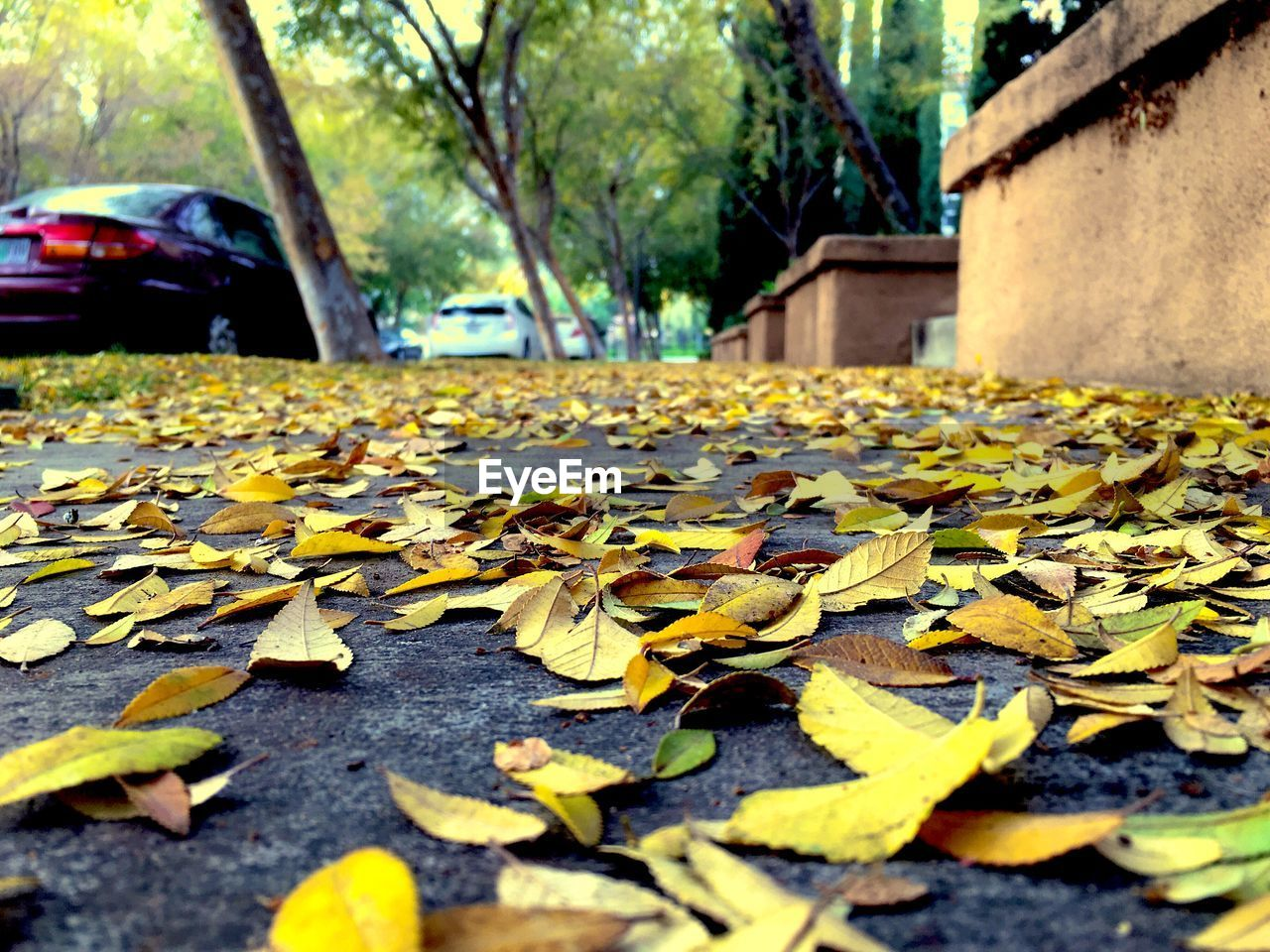 SURFACE LEVEL OF LEAVES ON ROAD