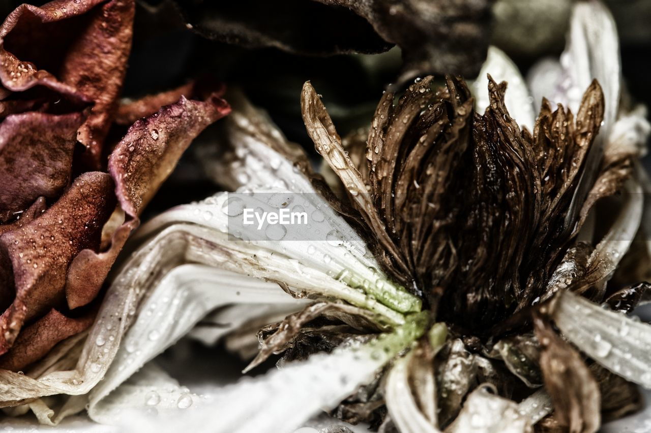 close-up, food, food and drink, freshness, flower, animal, no people, selective focus, insect, one animal, invertebrate, beauty in nature, plant, animal wildlife, nature, animals in the wild, animal themes, flowering plant, flower head, fragility