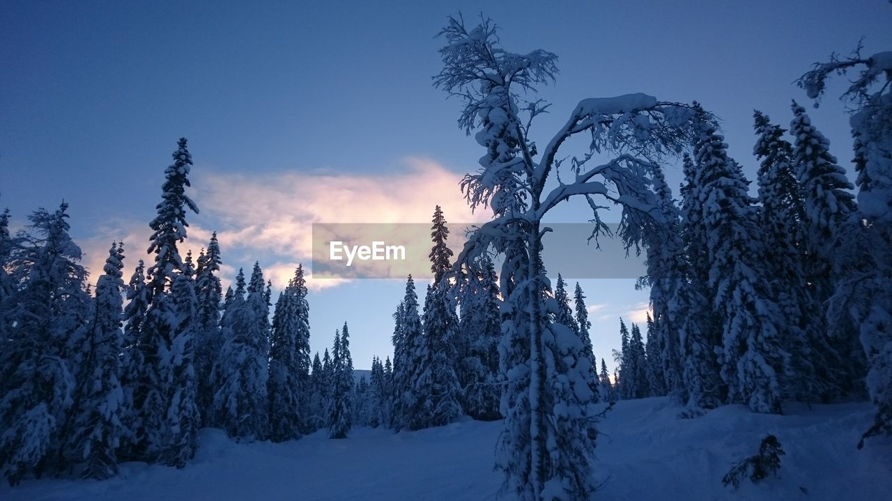 snow, cold temperature, winter, nature, tree, beauty in nature, tranquility, tranquil scene, no people, weather, scenics, landscape, outdoors, sky, blue, day