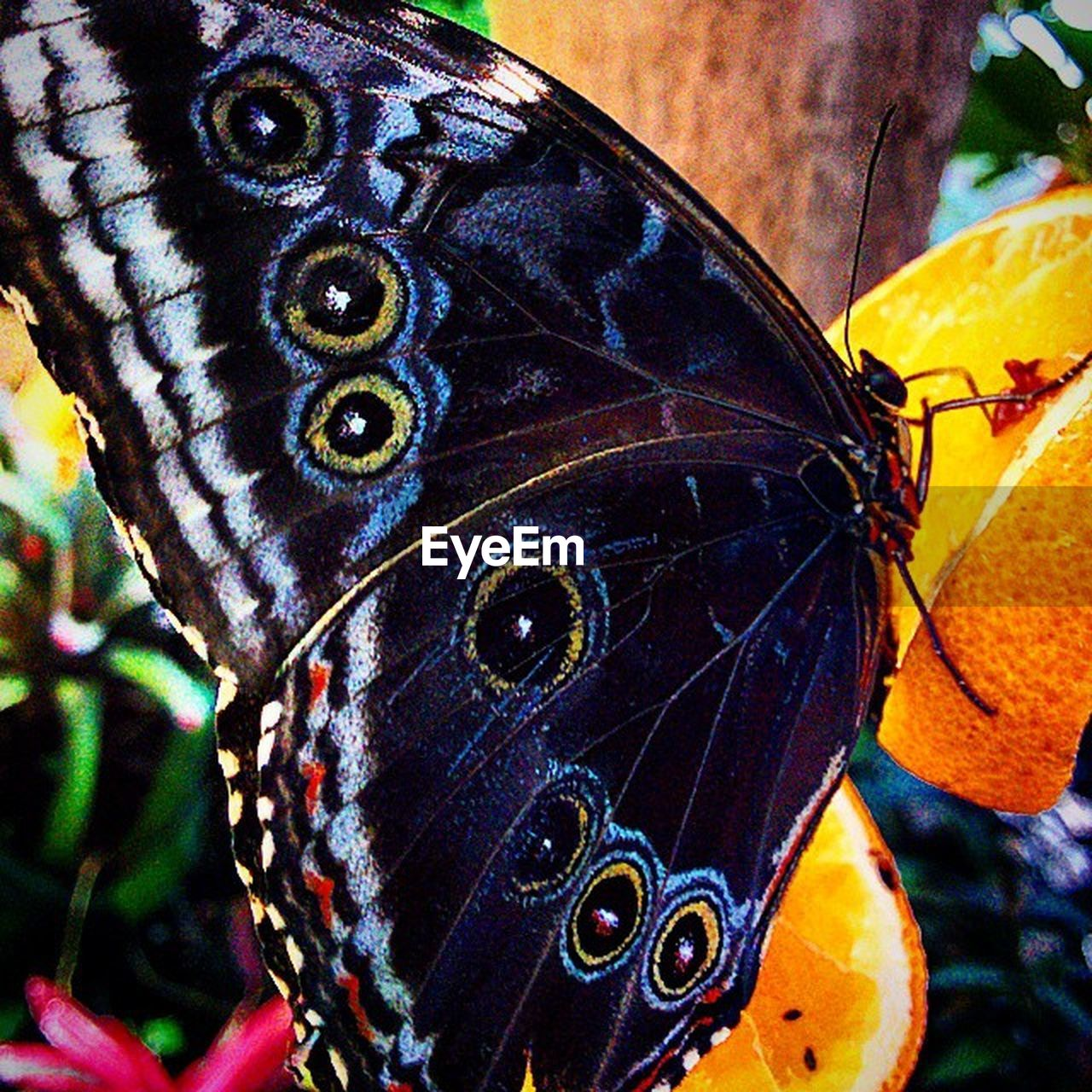butterfly - insect, insect, one animal, animal themes, close-up, animals in the wild, butterfly, focus on foreground, day, outdoors, nature, no people, animal wildlife, animal markings, beauty in nature, fragility, flower, perching, flower head