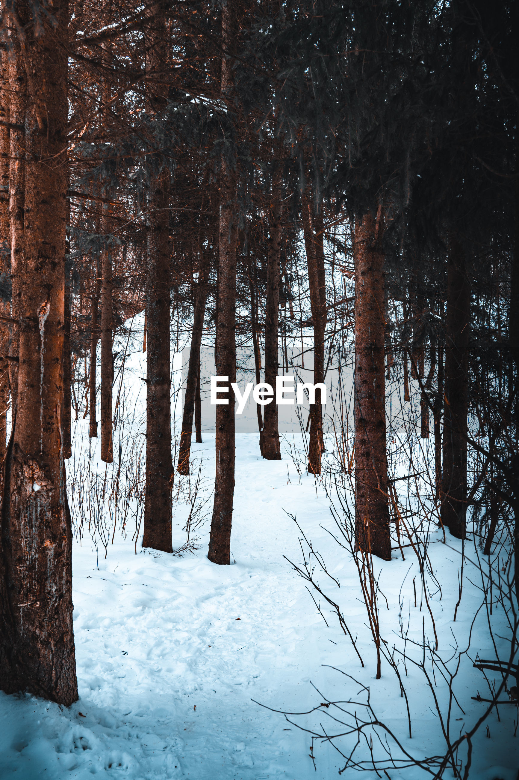 Scenic view of frozen trees in forest during winter