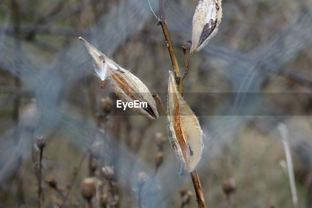 Close-Up Of Dried Plant Seen Through Chainlink Fence