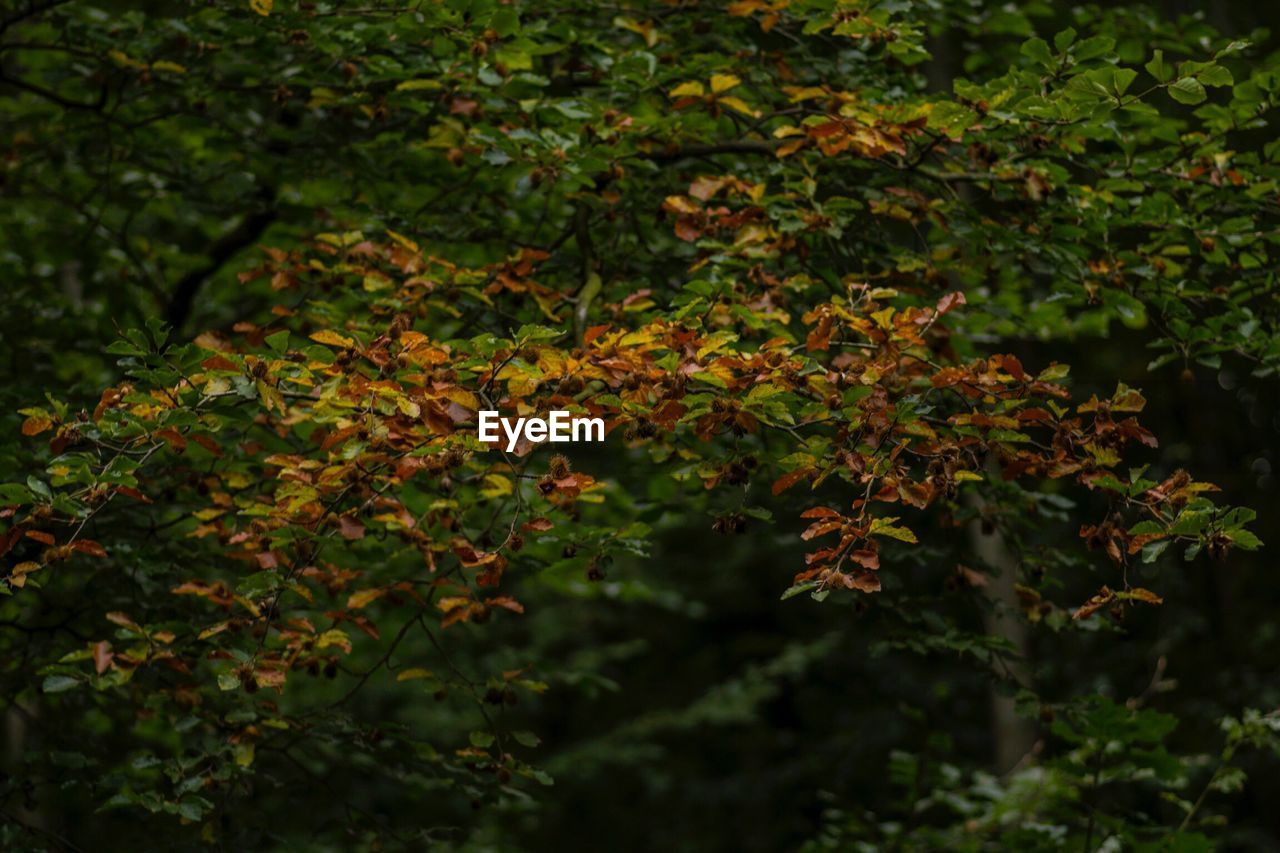 foliage, nature, growth, day, outdoors, no people
