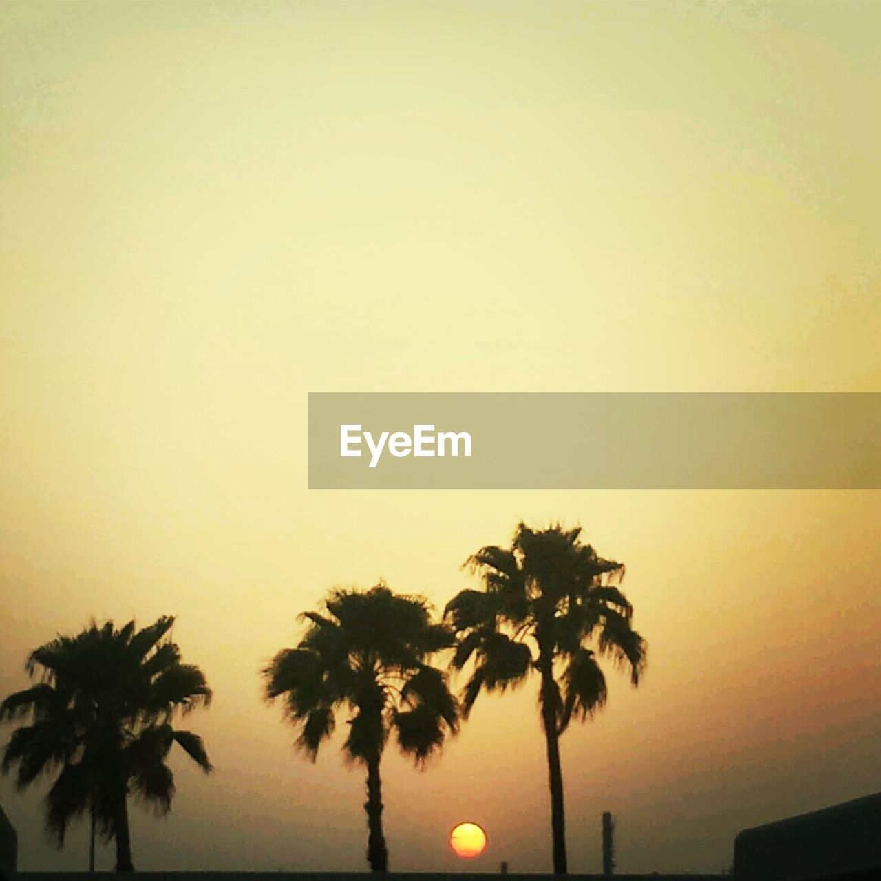tree, palm tree, silhouette, sunset, clear sky, beauty in nature, outdoors, nature, no people, scenics, sky, growth, day
