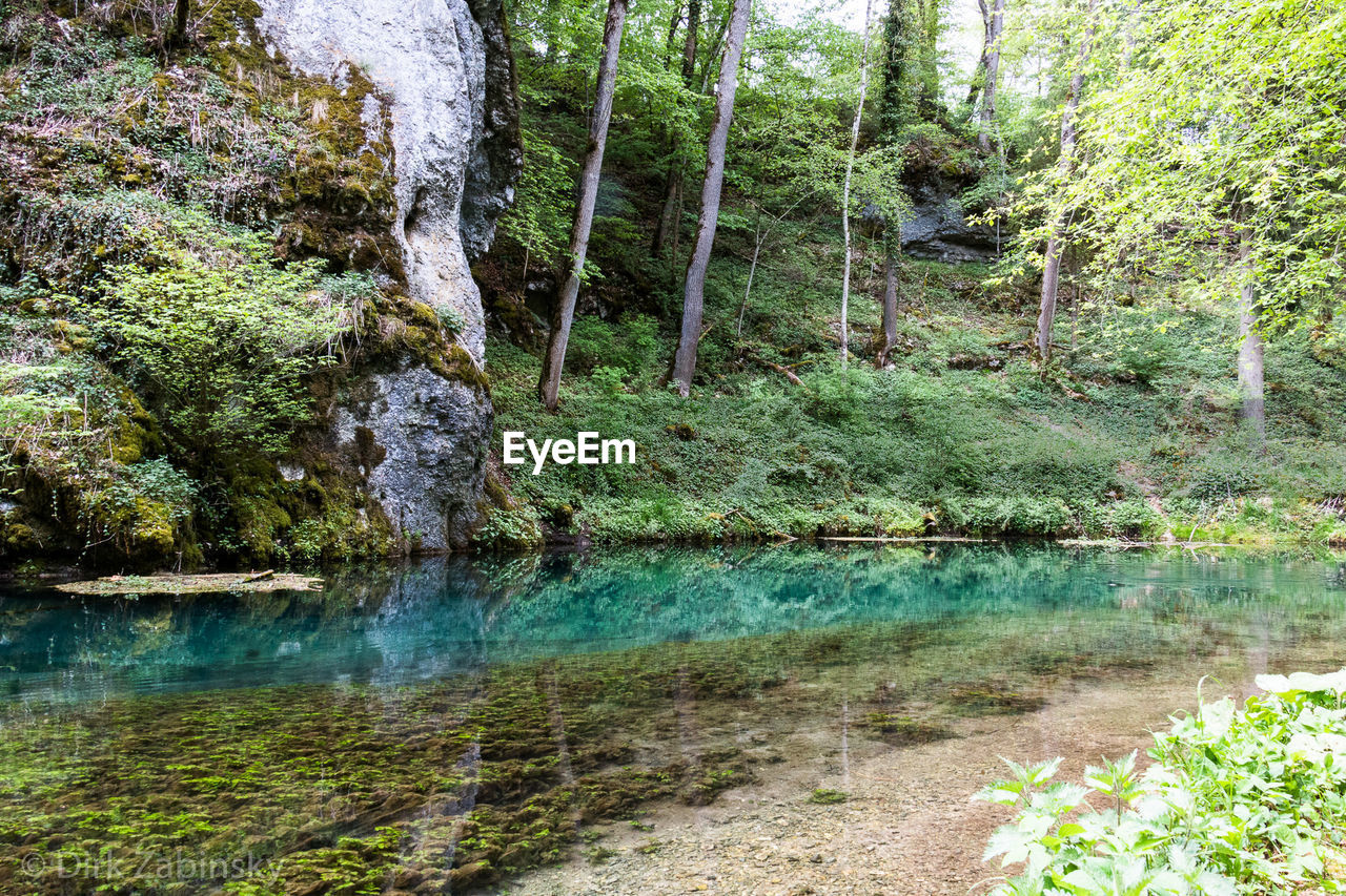 water, forest, tree, plant, land, beauty in nature, nature, tranquility, rock, day, no people, scenics - nature, growth, rock - object, solid, tranquil scene, downloading, outdoors, lake, flowing water, flowing, woodland, stream - flowing water