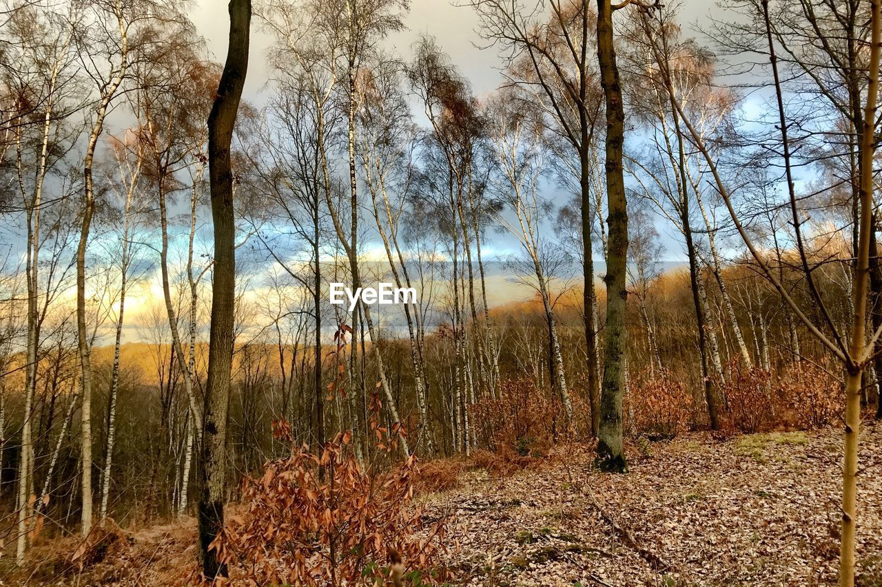 tree, plant, land, tranquility, forest, no people, nature, tranquil scene, beauty in nature, sky, landscape, bare tree, non-urban scene, environment, scenics - nature, day, growth, trunk, tree trunk, woodland, outdoors, change