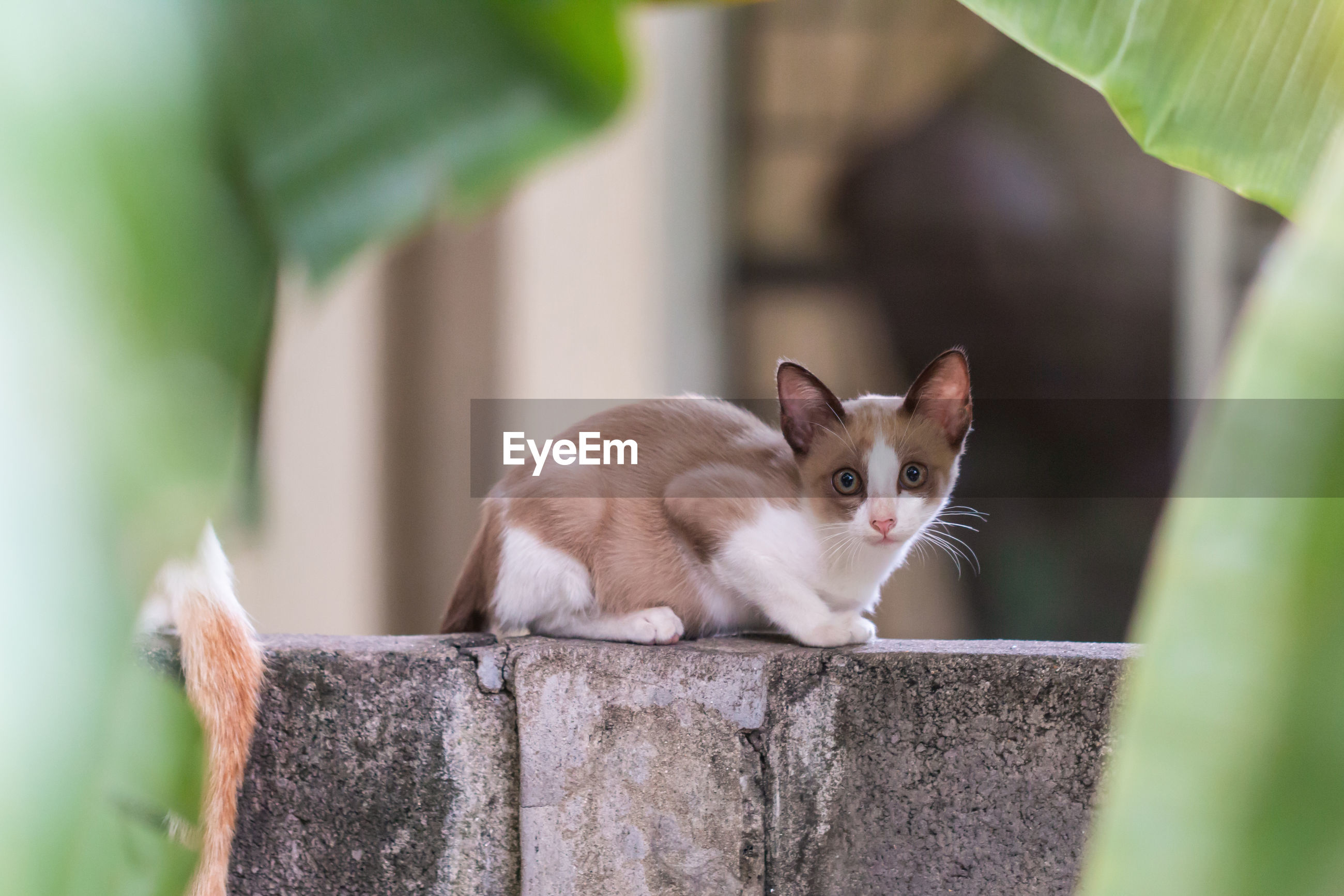 Cat sitting on wooden fence at yard
