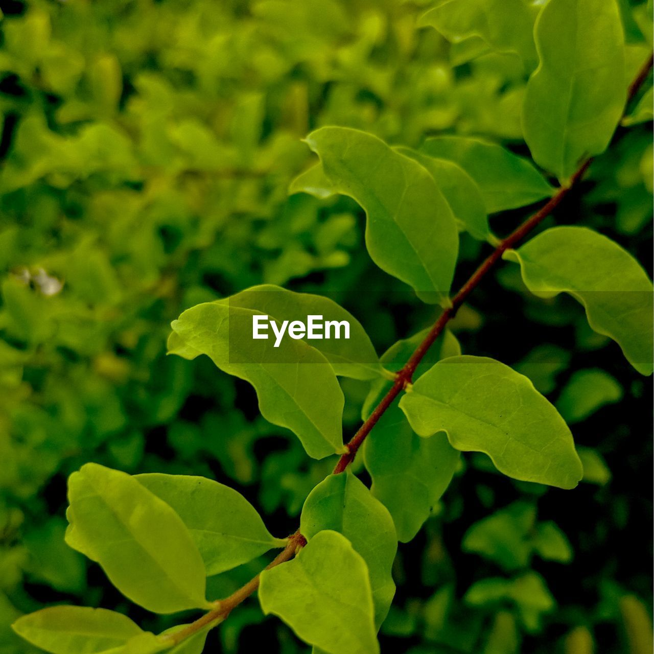 plant part, leaf, plant, growth, green color, beauty in nature, close-up, nature, no people, day, focus on foreground, selective focus, outdoors, freshness, tranquility, high angle view, vulnerability, leaves, fragility, plant stem