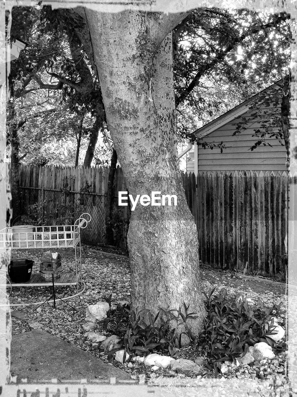tree, built structure, outdoors, tree trunk, day, architecture, no people, nature, growth, building exterior, sky