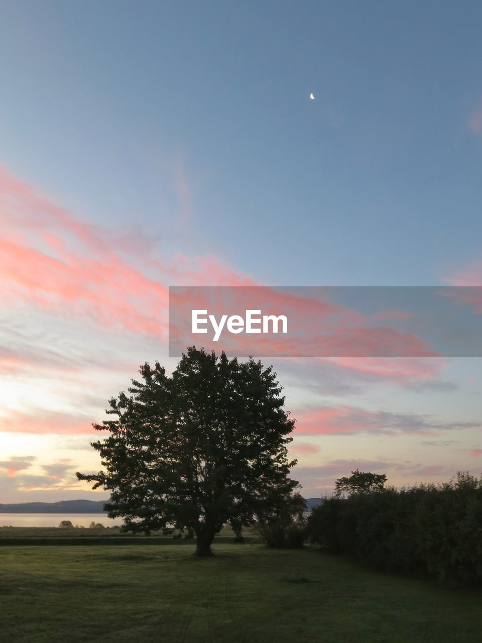 sky, tree, plant, beauty in nature, tranquility, tranquil scene, sunset, scenics - nature, land, field, moon, cloud - sky, nature, growth, no people, landscape, environment, grass, non-urban scene, idyllic, outdoors