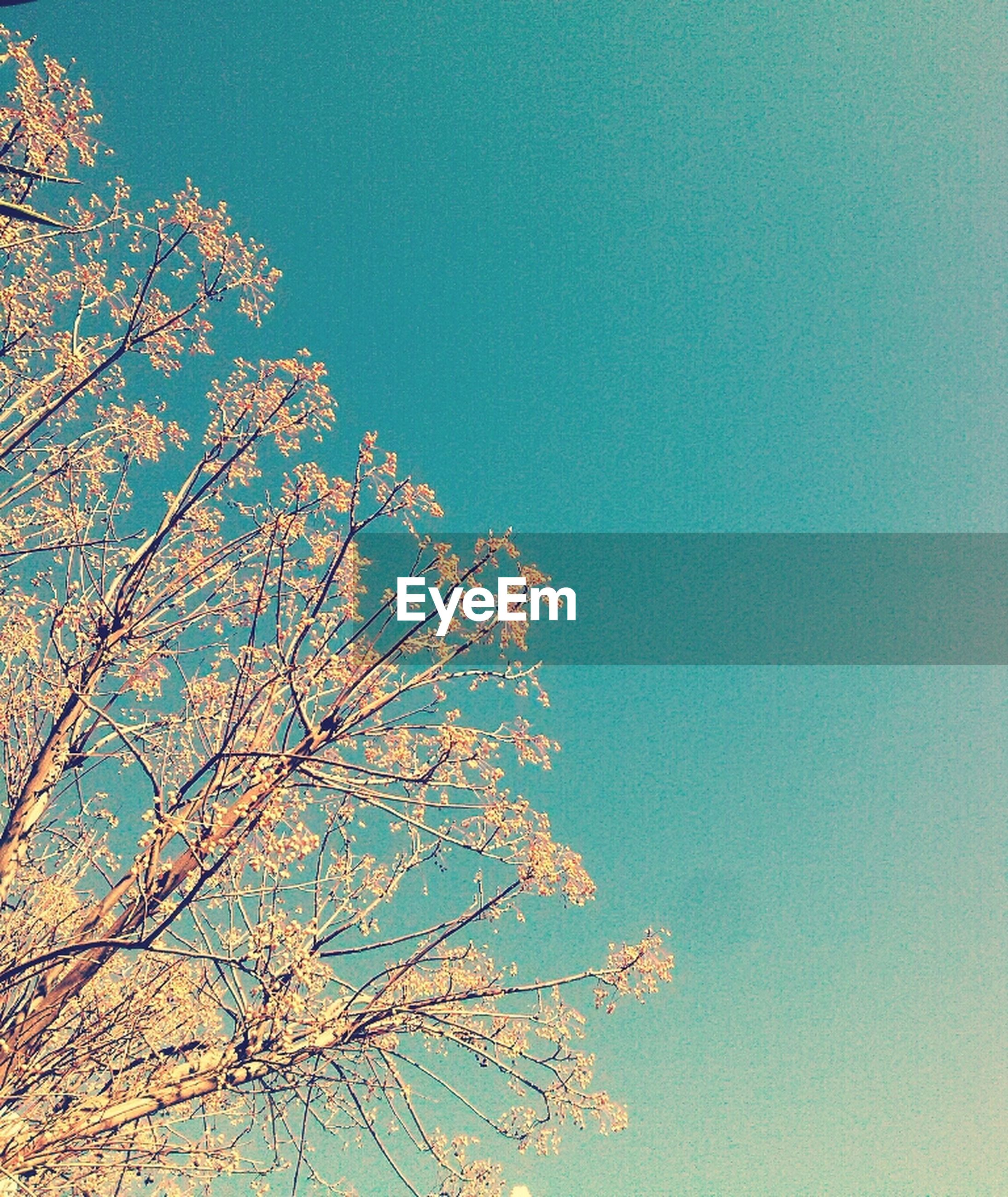 low angle view, tree, branch, clear sky, beauty in nature, growth, nature, flower, sky, tranquility, blue, high section, scenics, freshness, outdoors, copy space, no people, season, fragility, day