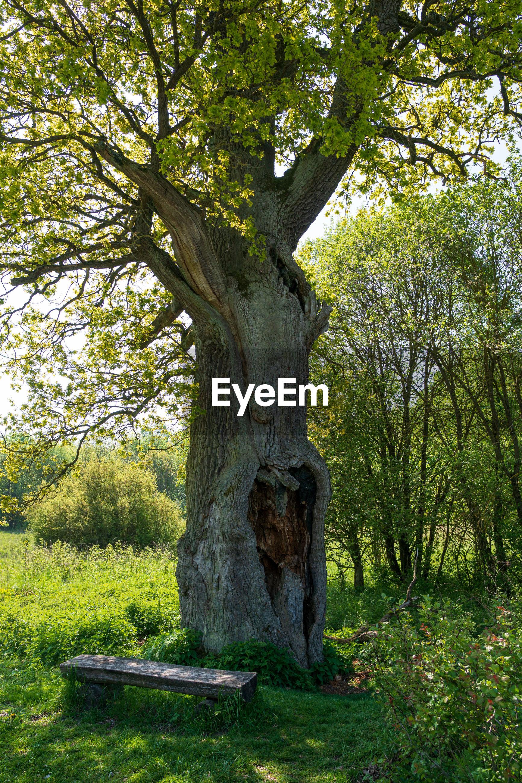 TREE TRUNK IN PARK