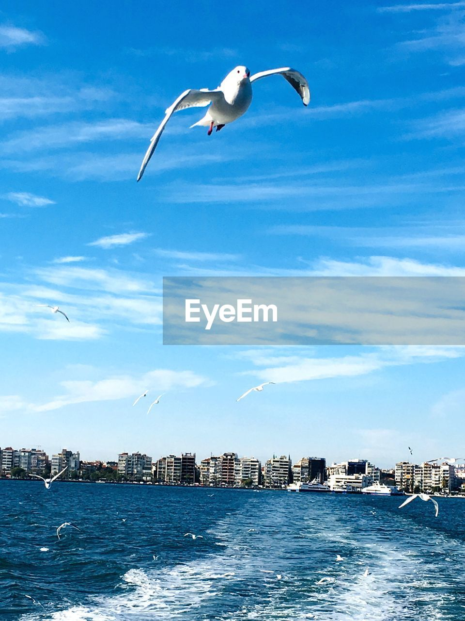 animals in the wild, vertebrate, animal wildlife, bird, flying, animal themes, animal, water, sky, spread wings, sea, one animal, mid-air, seagull, no people, building exterior, cloud - sky, architecture, waterfront, outdoors, cityscape