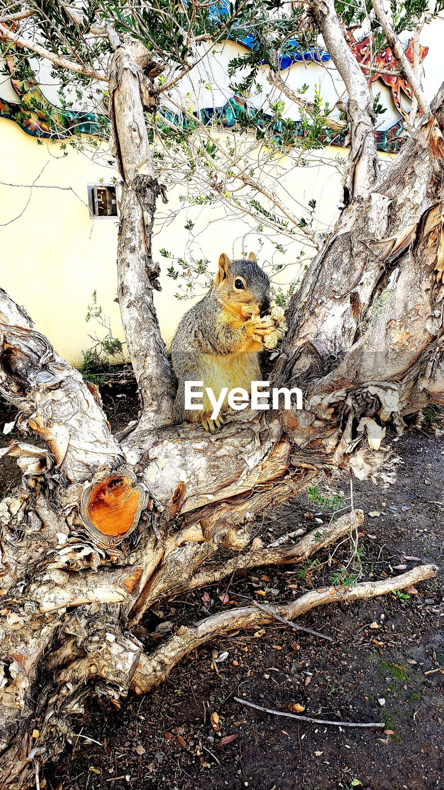 VIEW OF SQUIRREL ON TREE BRANCH