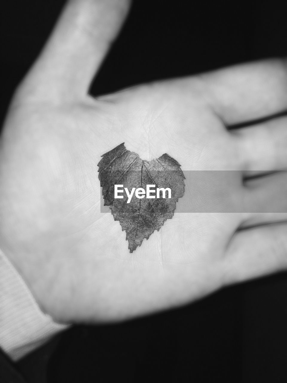 human hand, one person, close-up, human body part, men, real people, indoors, day, one man only, people