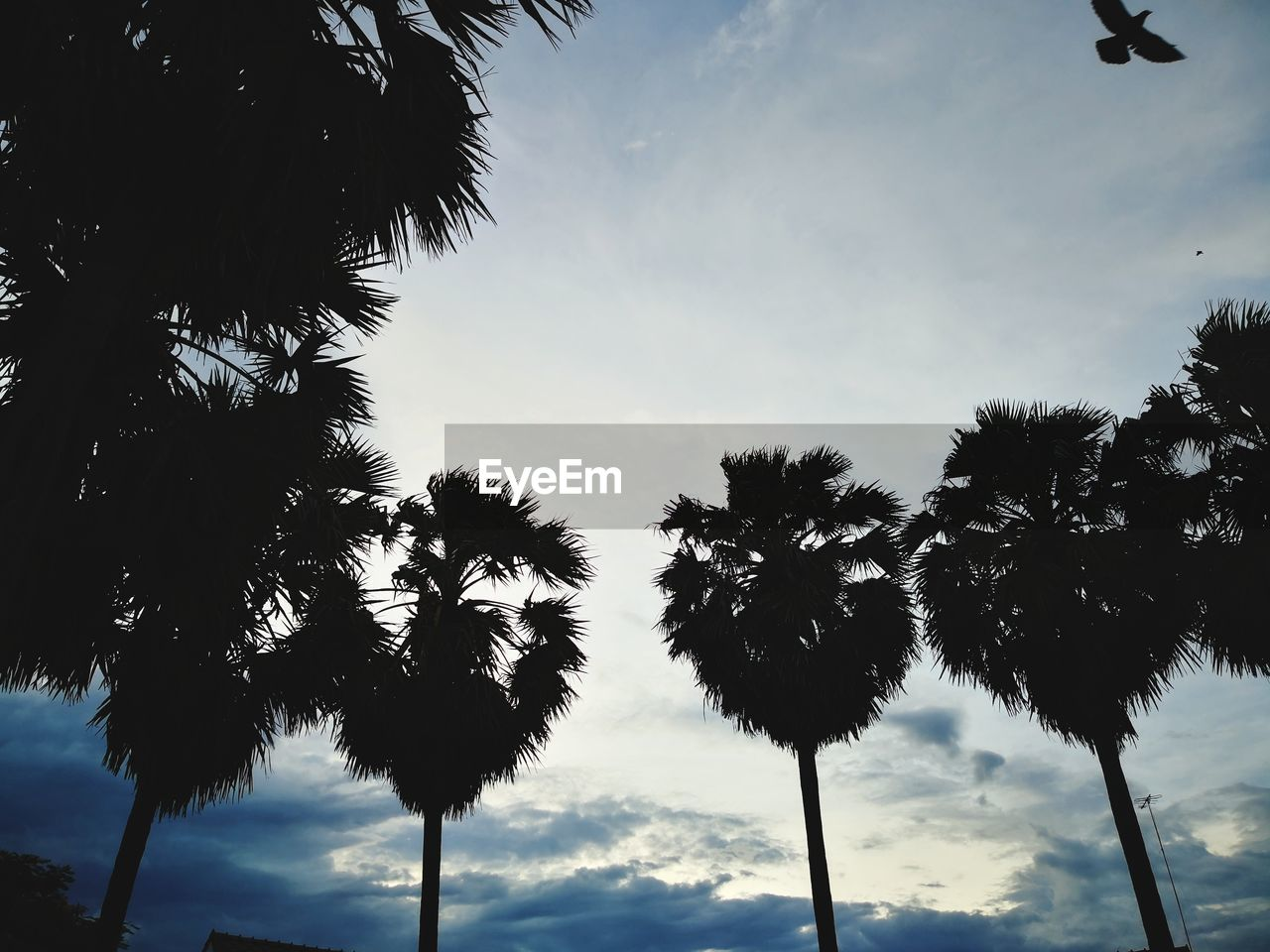 tree, sky, palm tree, low angle view, tropical climate, plant, cloud - sky, silhouette, growth, nature, beauty in nature, no people, day, tranquility, tree trunk, outdoors, trunk, tranquil scene, tall - high, scenics - nature, coconut palm tree, tropical tree, palm leaf