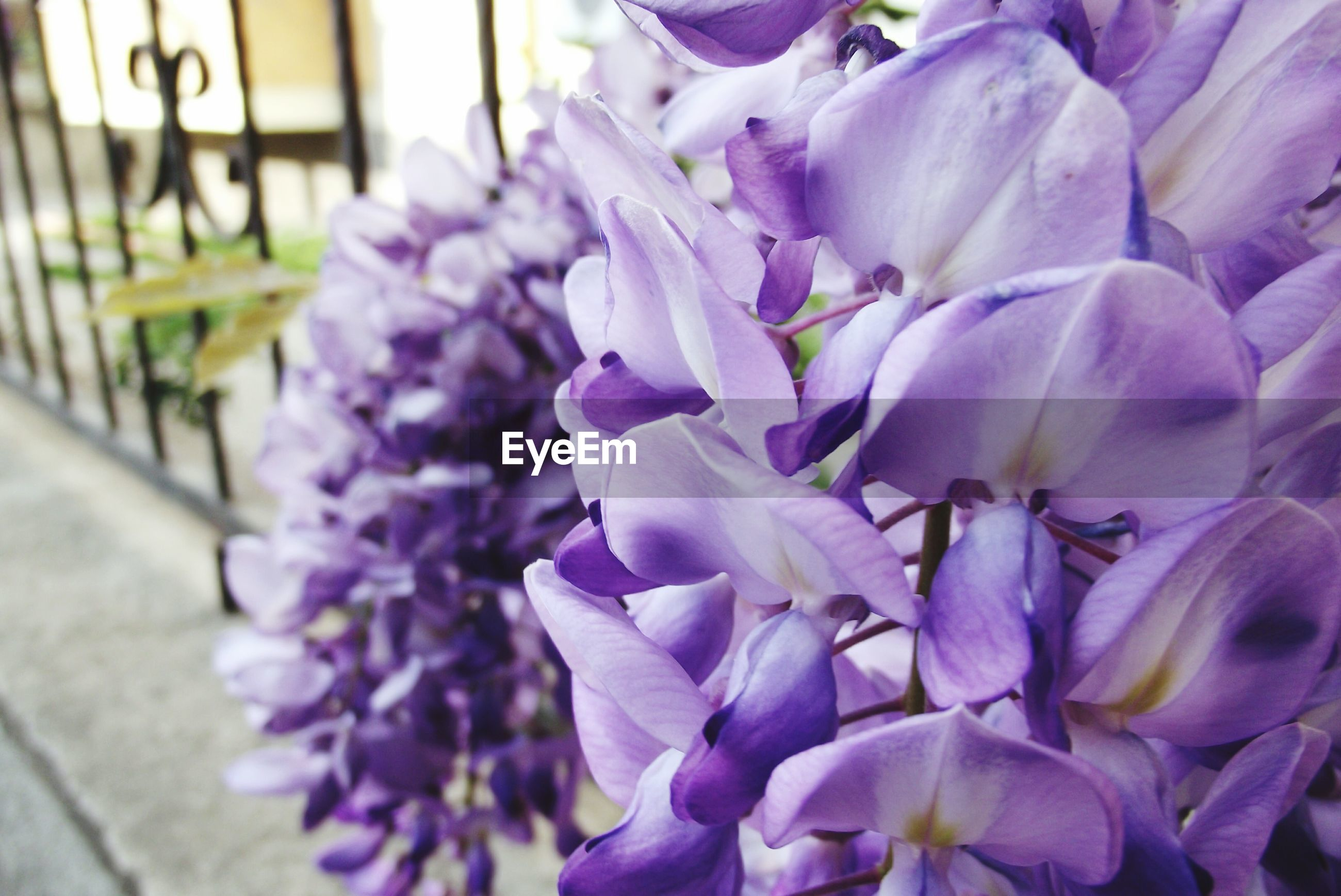 flower, purple, nature, freshness, beauty in nature, fragility, growth, close-up, outdoors, day, no people, flower head