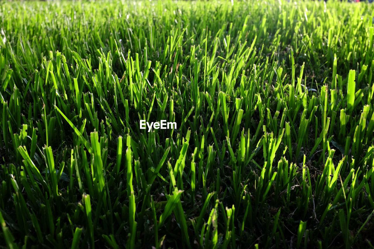 green color, plant, growth, field, land, full frame, beauty in nature, nature, backgrounds, landscape, rural scene, day, no people, agriculture, tranquility, crop, farm, freshness, cereal plant, lush foliage, outdoors, blade of grass