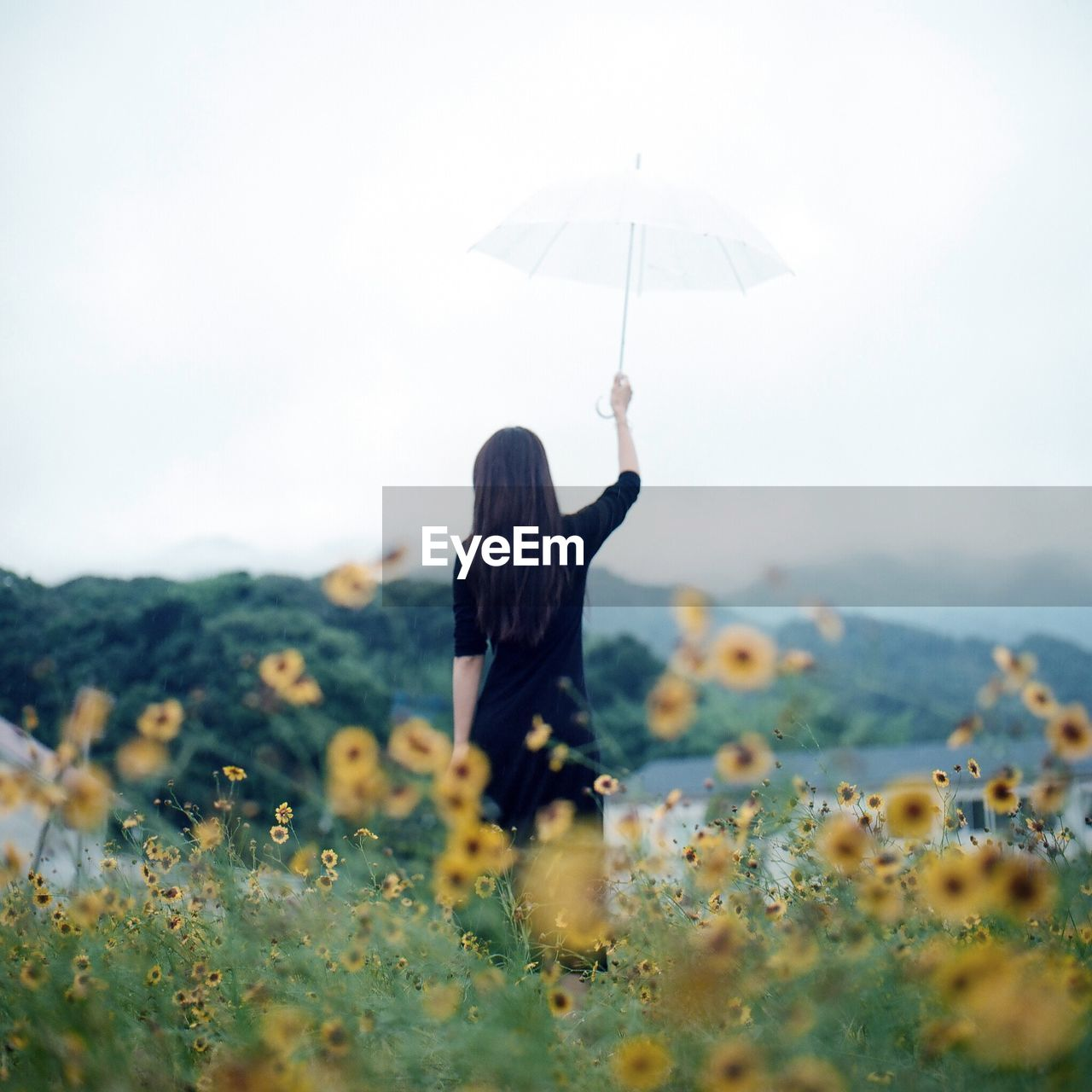 Rear View Of A Woman With Umbrella At Flower Field