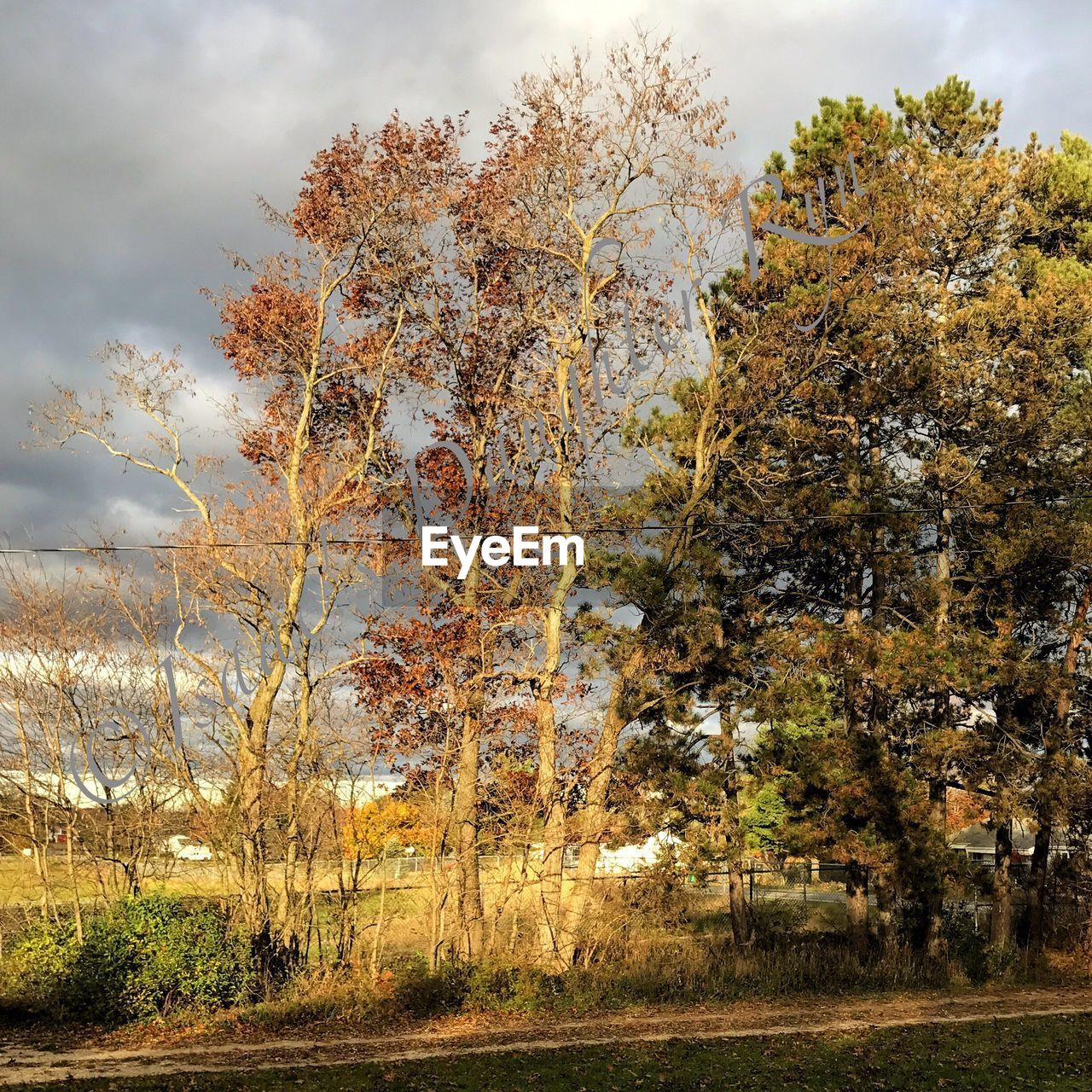 tree, autumn, nature, tranquility, beauty in nature, tranquil scene, no people, growth, scenics, change, day, outdoors, sky, cloud - sky, landscape, leaf, branch