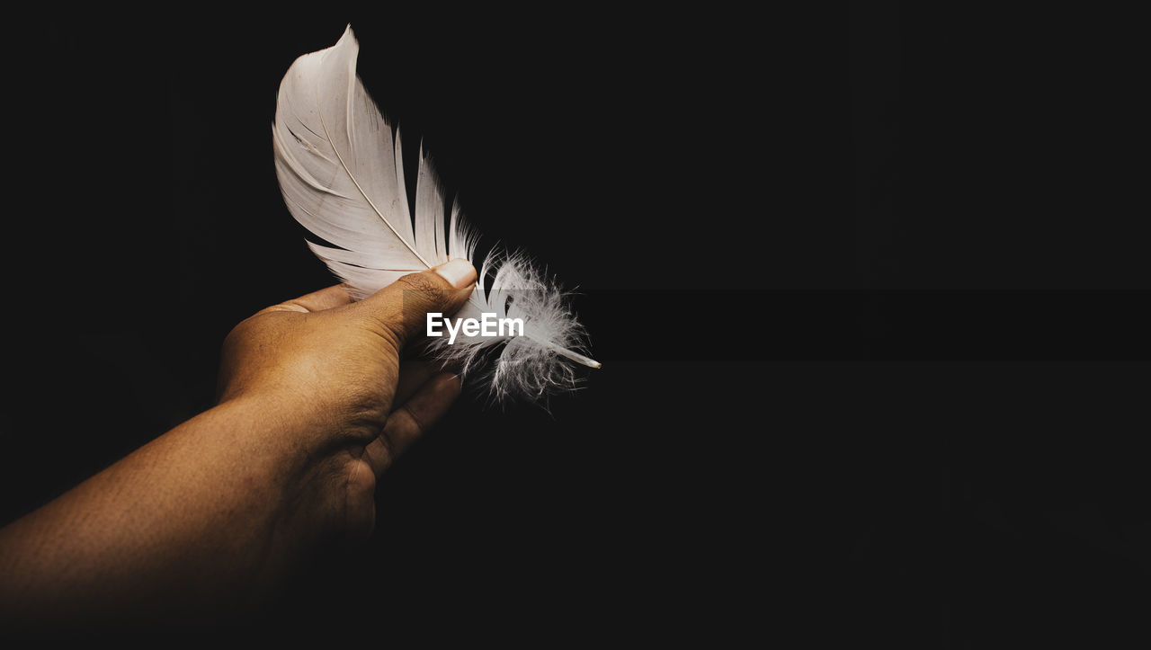 Cropped hand of person holding feather against black background