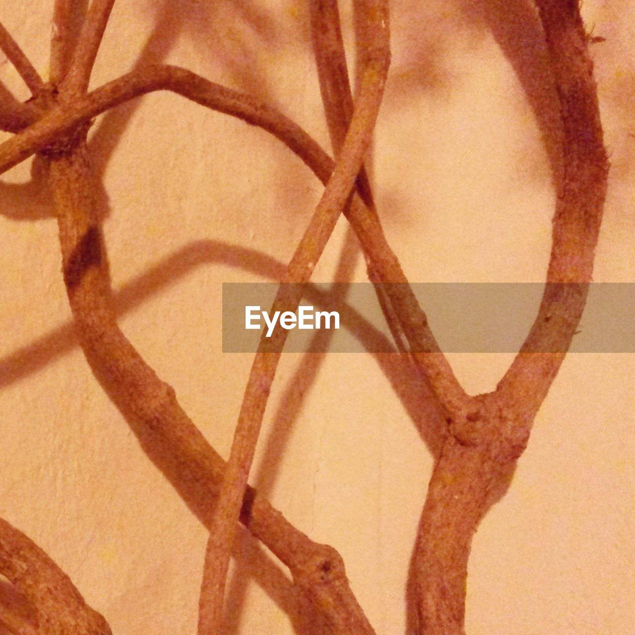 Close-Up Of Branches Against Wall