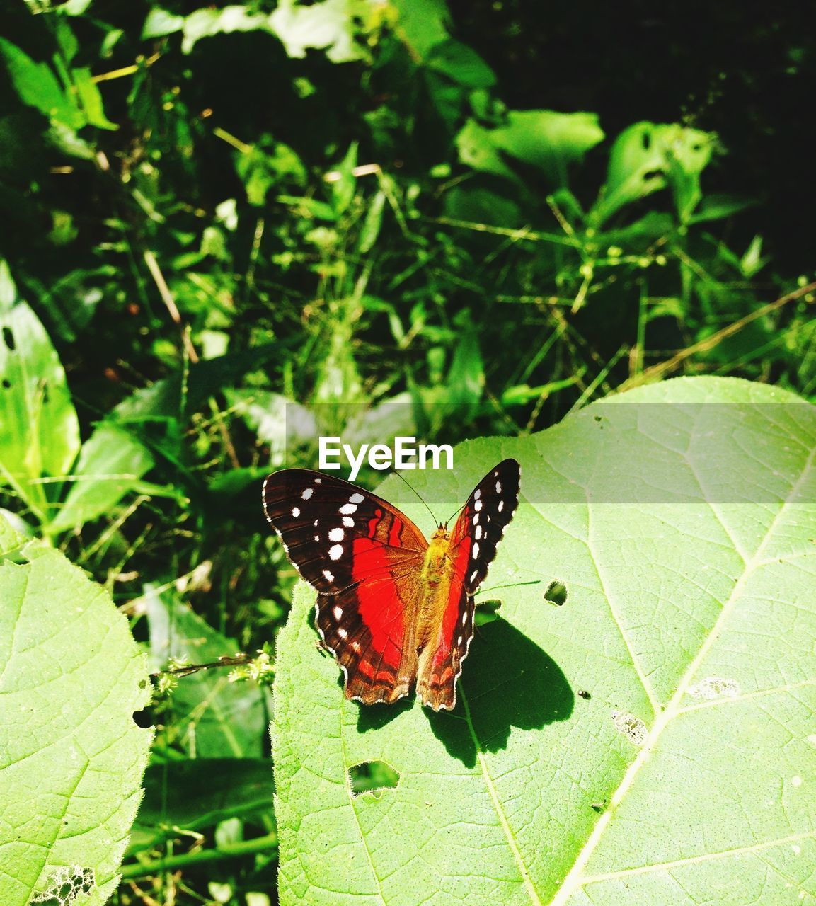 insect, butterfly - insect, one animal, animals in the wild, leaf, butterfly, animal themes, nature, plant, no people, outdoors, growth, green color, day, close-up, animal markings, fragility, beauty in nature, freshness