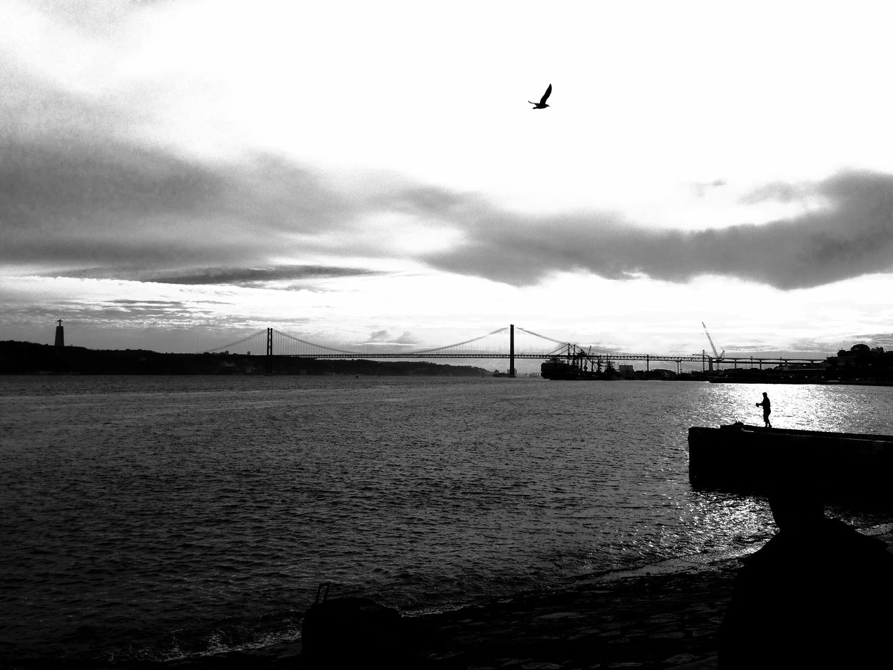 bird, water, animal themes, sea, flying, animals in the wild, sky, one animal, nature, outdoors, silhouette, connection, bridge - man made structure, day, built structure, no people, architecture, animal wildlife, mid-air, cloud - sky, suspension bridge, beauty in nature, scenics, spread wings