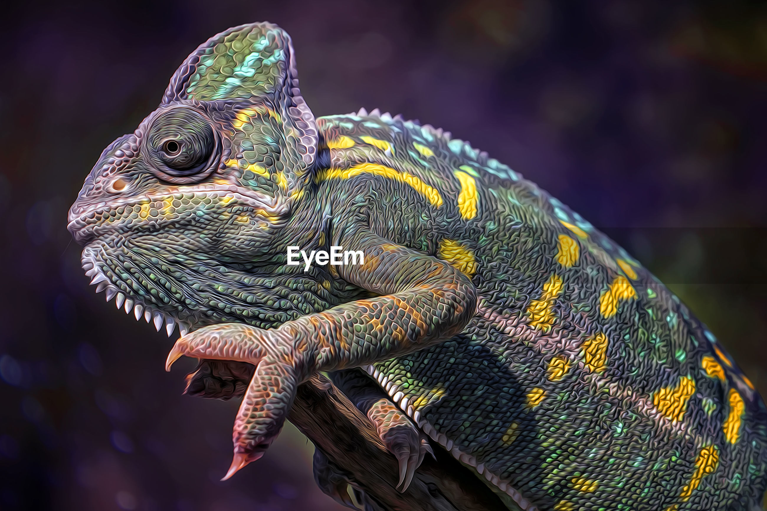 Close-up of a chameleon on branch