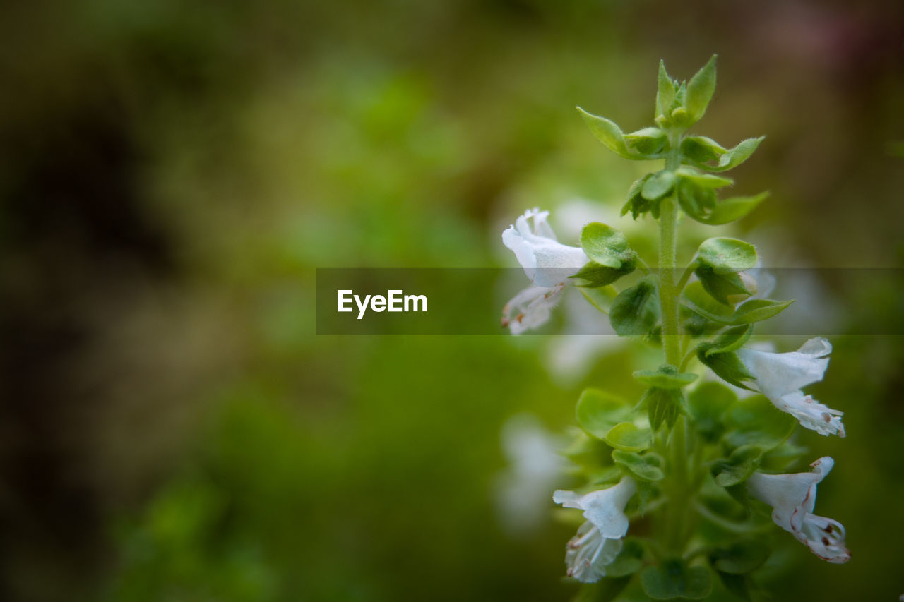 nature, plant, beauty in nature, growth, green color, no people, close-up, petal, flower, freshness, day, outdoors, fragility, flower head