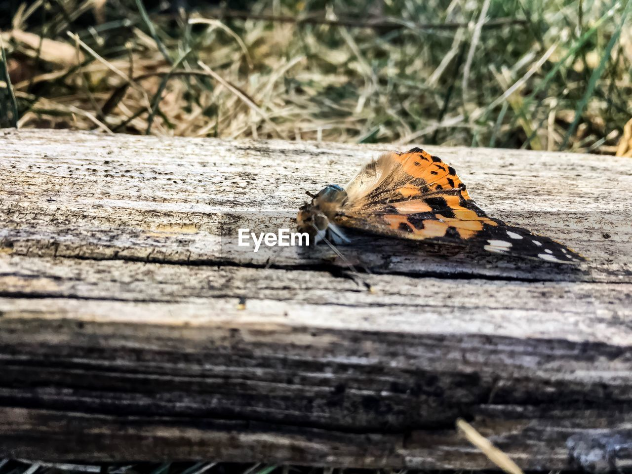 animal themes, animals in the wild, one animal, no people, insect, animal wildlife, outdoors, day, nature, butterfly - insect, close-up, sunlight, perching