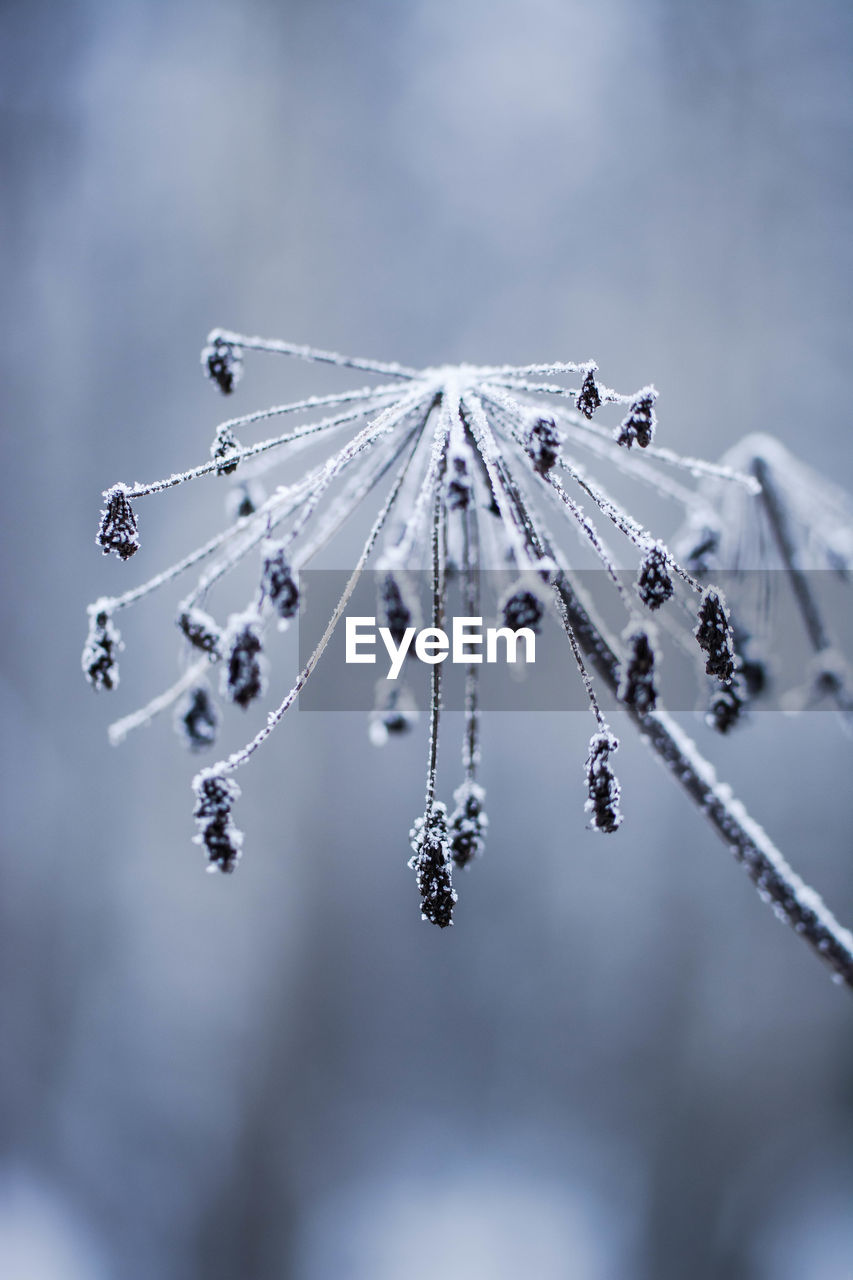 CLOSE-UP OF FROZEN ICE ON TWIG