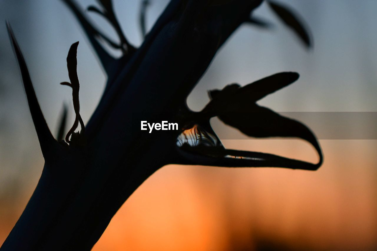 animal themes, animals in the wild, animal, one animal, animal wildlife, insect, invertebrate, close-up, focus on foreground, silhouette, selective focus, no people, nature, plant, black color, beauty in nature, day, outdoors, sky, animal wing, butterfly - insect