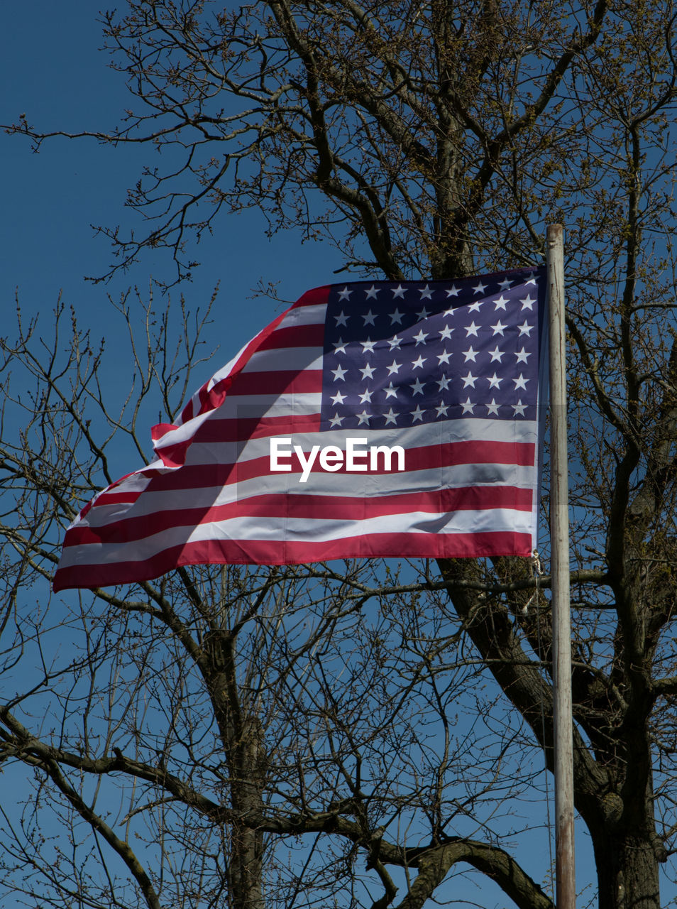 patriotism, tree, flag, stars and stripes, striped, low angle view, branch, bare tree, flag pole, no people, red, outdoors, clear sky, day, sky, close-up