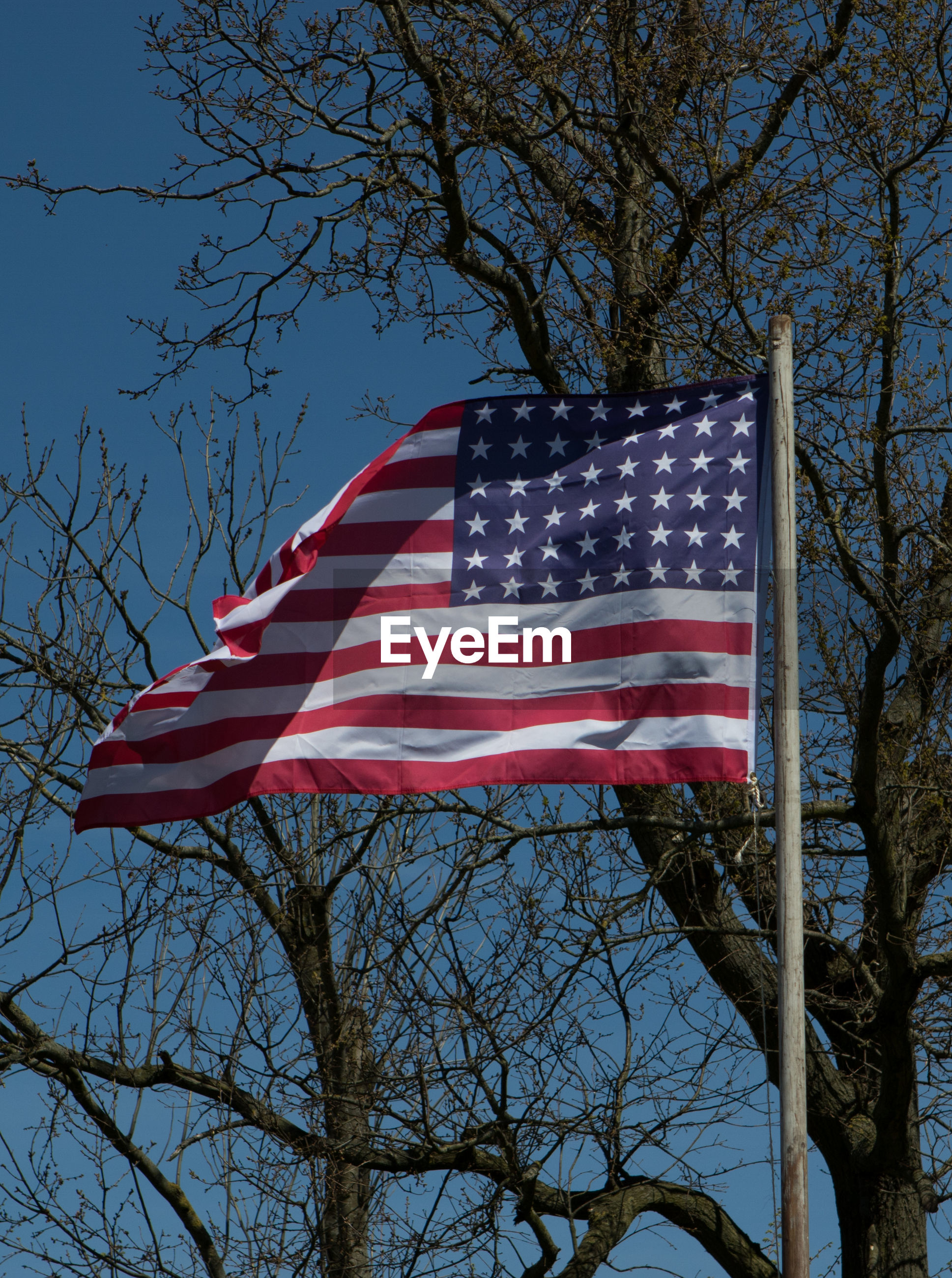 LOW ANGLE VIEW OF AMERICAN FLAG HANGING ON TREE