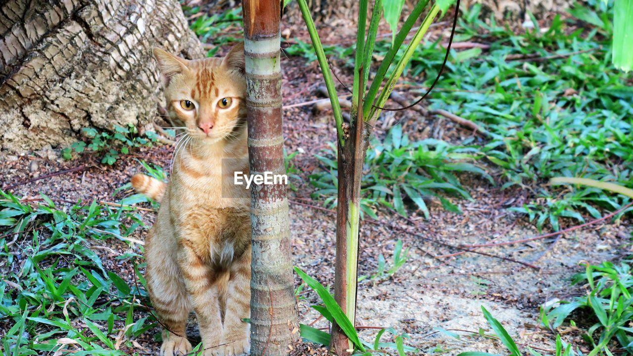 Portrait Of Kitten By Plant On Field