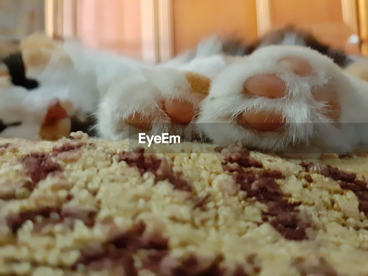 animal, one animal, animal themes, cat, domestic, pets, feline, mammal, domestic cat, domestic animals, no people, indoors, selective focus, vertebrate, close-up, relaxation, white color, rug, home interior, whisker, softness