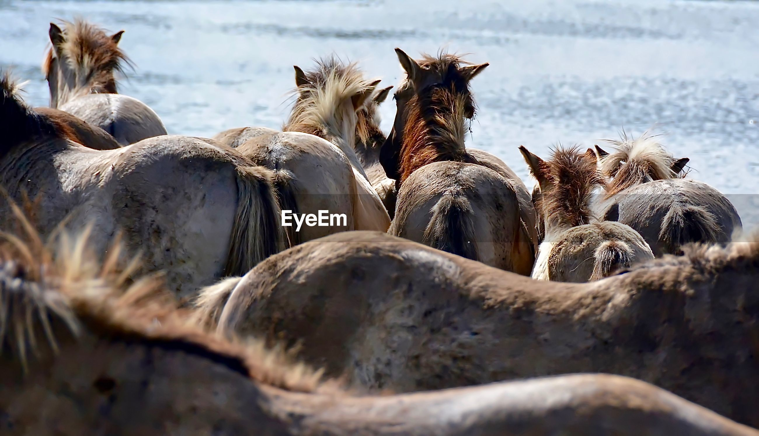 High angle view of horses by sea