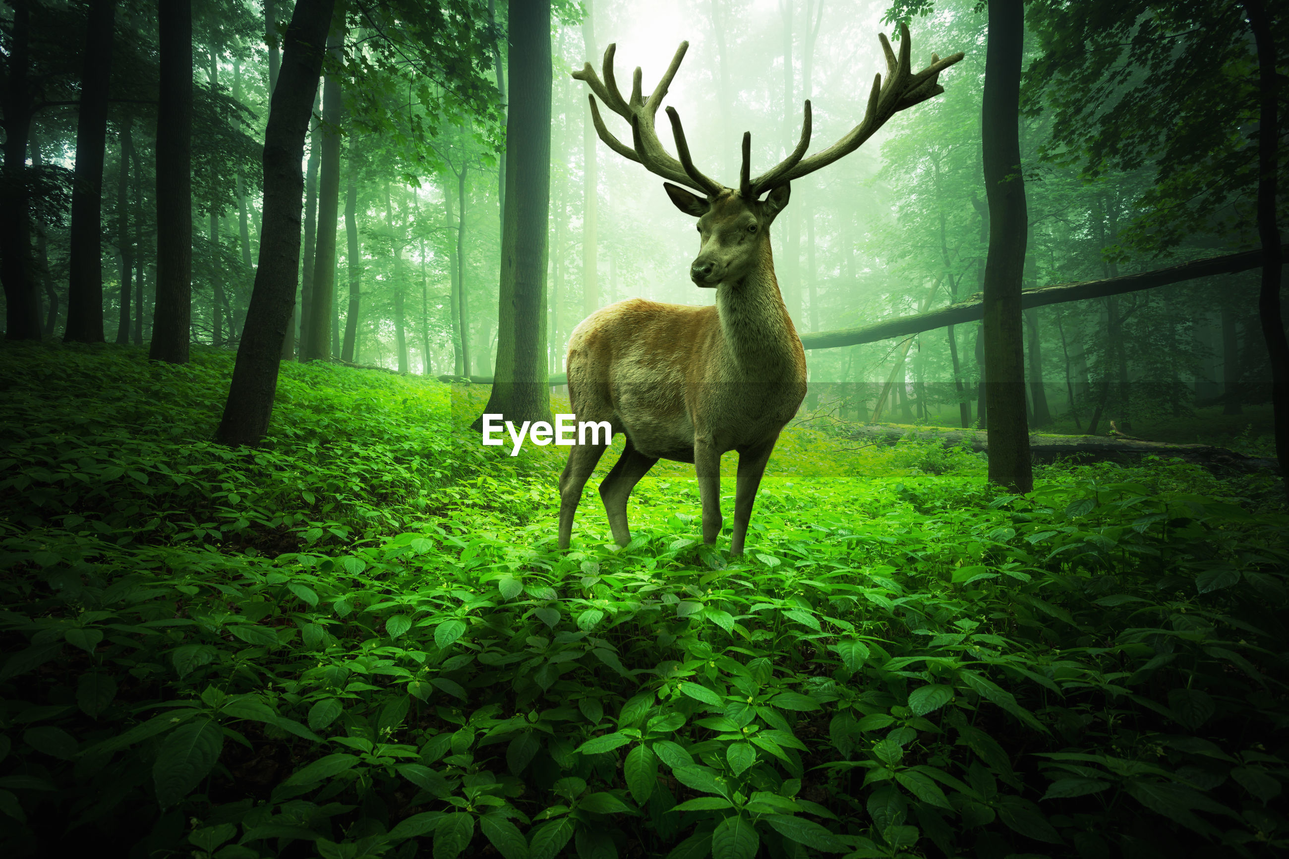Big deer stands in a magical forest