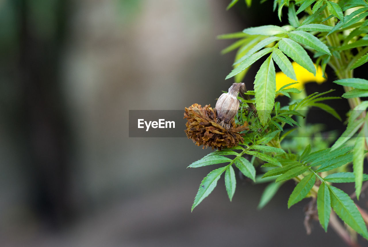 green color, leaf, nature, plant, no people, close-up, focus on foreground, growth, day, animals in the wild, outdoors, fragility, beauty in nature, animal themes, freshness