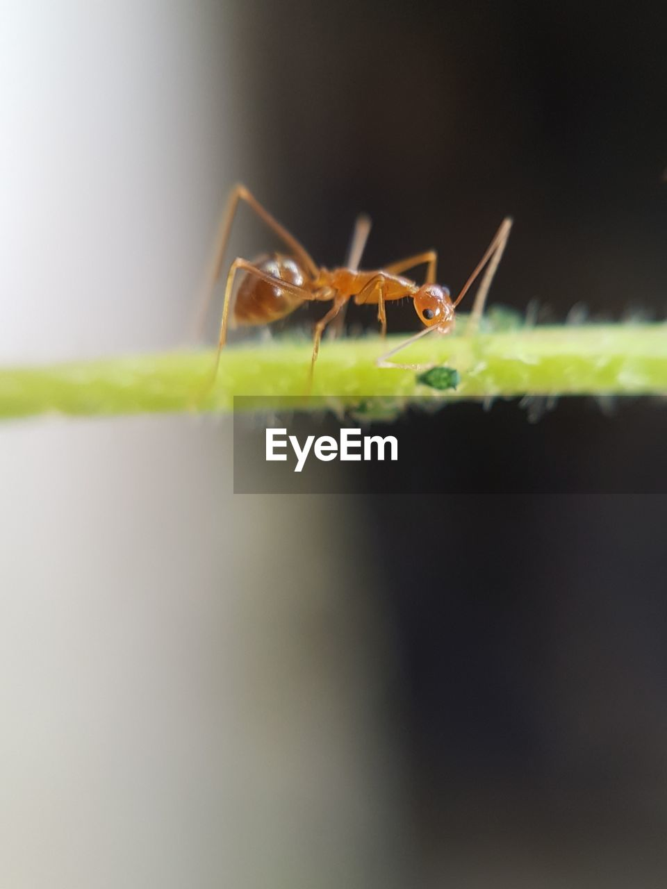 insect, invertebrate, animals in the wild, animal wildlife, animal, selective focus, close-up, animal themes, one animal, green color, no people, nature, plant part, arthropod, leaf, day, zoology, animal body part, arachnid, outdoors