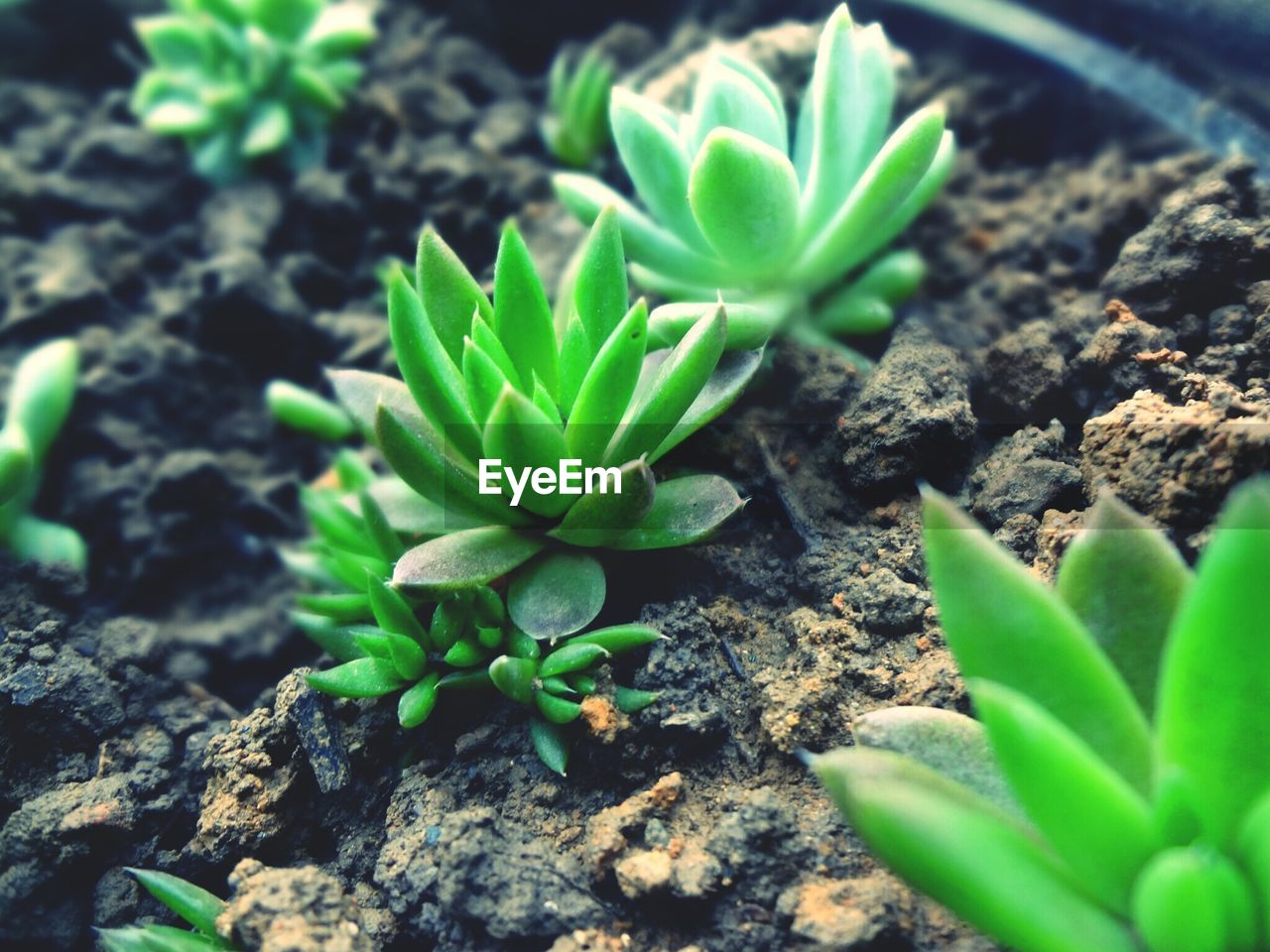 growth, plant, green color, nature, young plant, new life, beginnings, fragility, leaf, growing, beauty in nature, sapling, botany, green, selective focus, no people, freshness, potted plant, day, outdoors, close-up